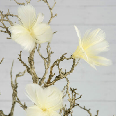 Fjäderblomma 12-Pack – Ljusgul