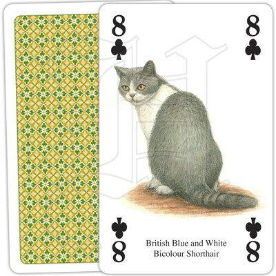 Kortlek Katt